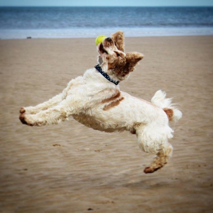 The Pet Shop Rippn, Archie and Dexter, Marske Beach