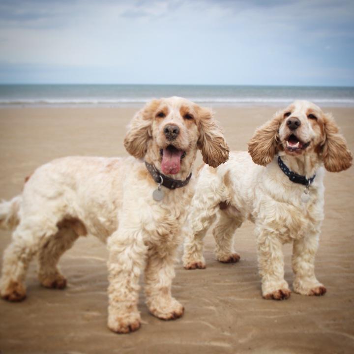 The Pet Shop Ripon, Archie and Dexter,Marske Beach