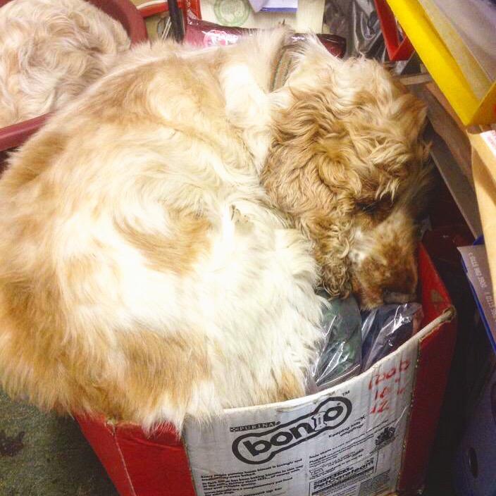 Archie and Dexter, The  Pet Shop Ripon
