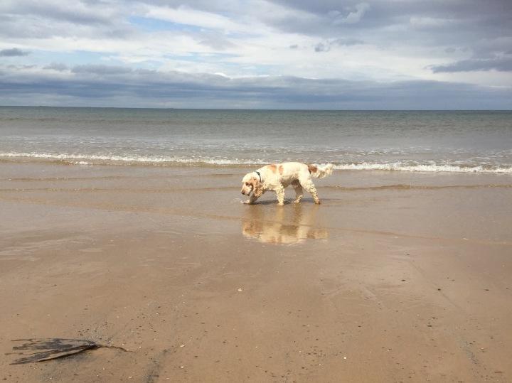 ThePet Shop Ripon, Archie and Dexter,Marske Beach