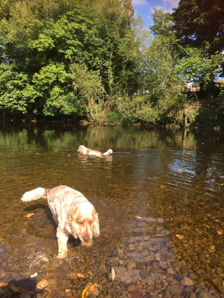 The Pet Shop Ripon. Archie and Dexter,  The River Ure