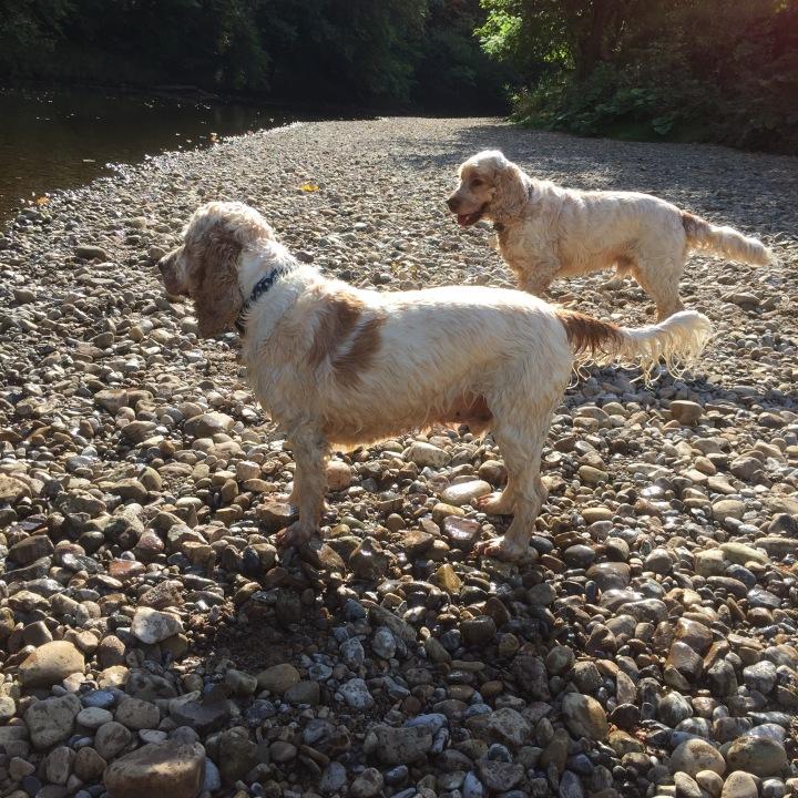 The Pet Shop Ripon, Archie and Dexter River Ure Ripon
