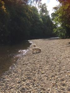 The pet shop ripon, river ure ripon, Archie and Dexter