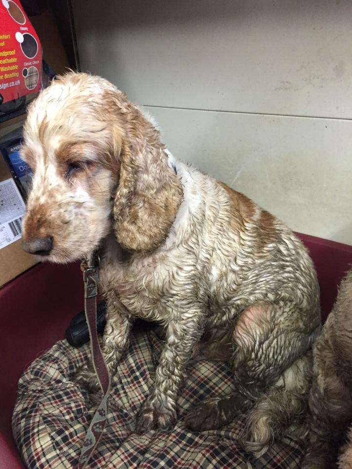 Dexter after his walk, the pet shop ripon, north yorkshire