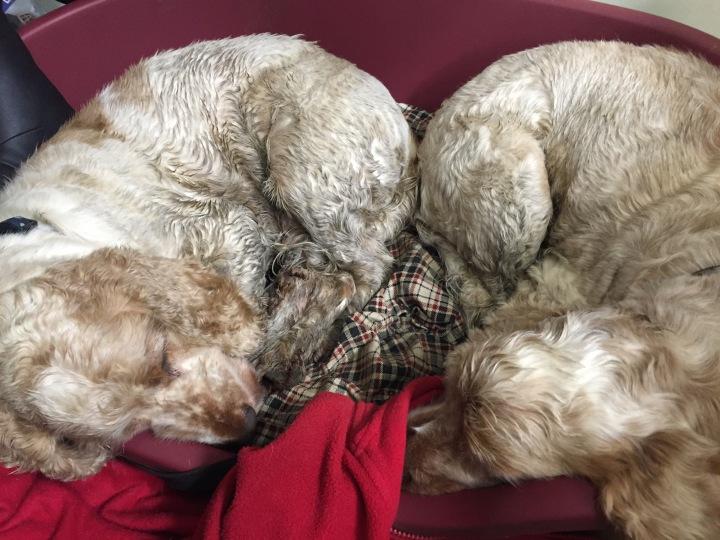 The Pet Shop Ripon North Yorkshire, dirty dog walk