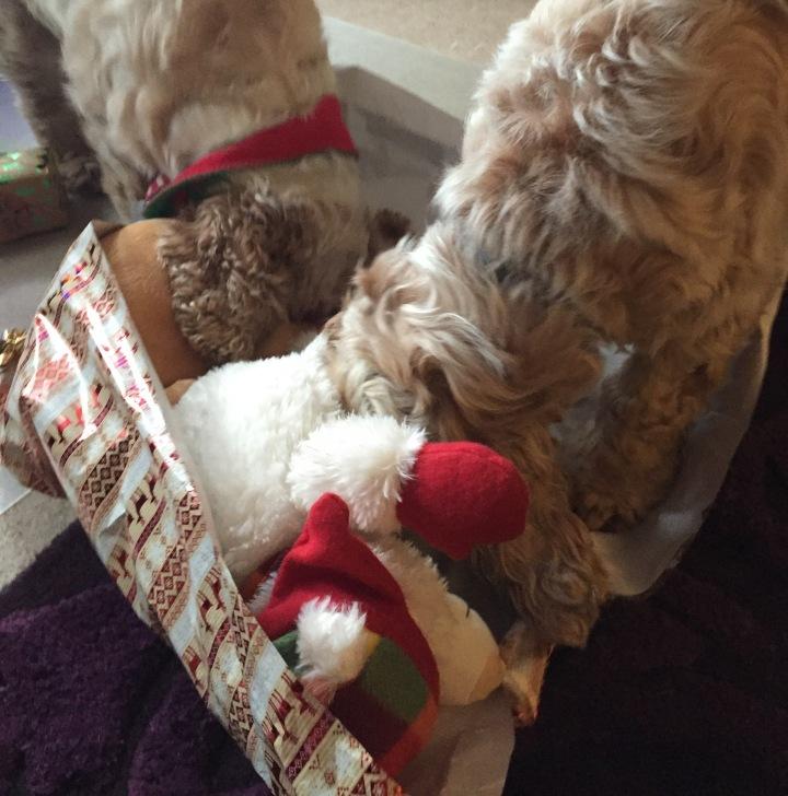christmas, the pet shop ripon, archie and dexter