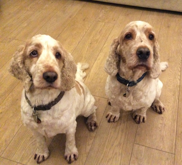 archie and dexter, the pet shop ripn, north yorkshire,    dog groomer
