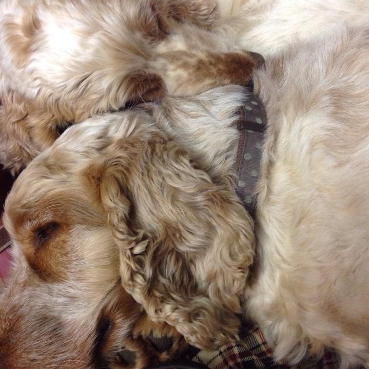 the pet shop ripon, archie and dexter asleep