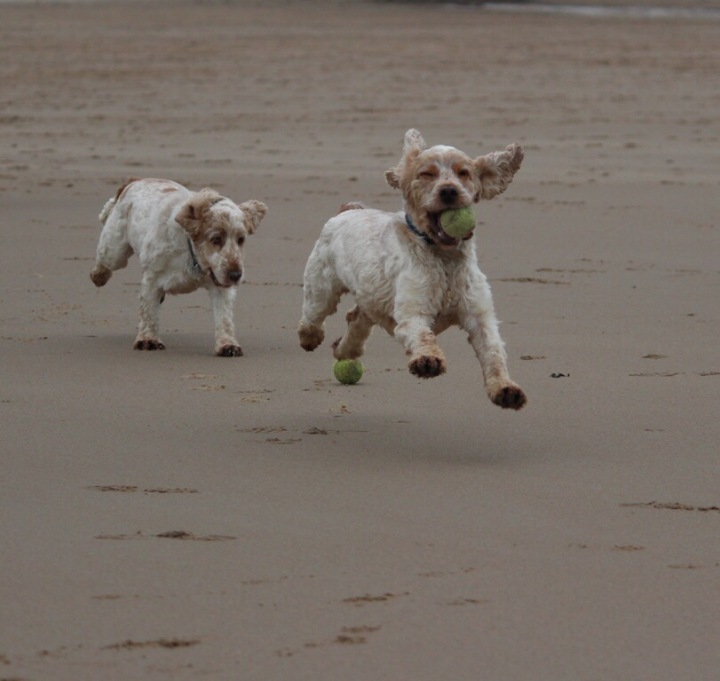 tynemouth beach, archie and dexter, the pet shop ripon