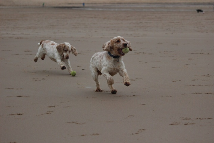 tynemouth beach, the pet shop ripon, archie and dexter