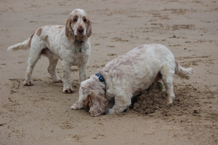 tynemouth beach, atchie and dexter, the pet shop ripon
