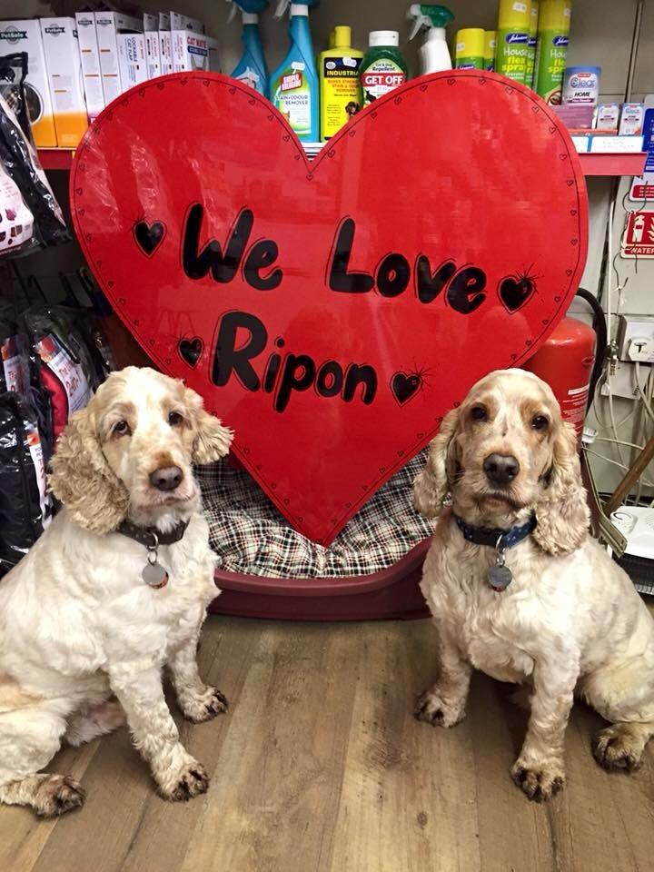 archie and dexter, we love ripon, the pet shop ripon