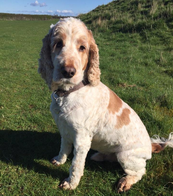 dexter, the pet shop ripon, dog, north yorkshire