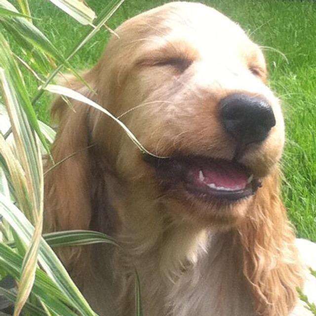 archie puppy, the pet shop ripon