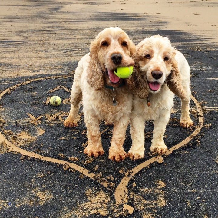 archie and dexter, the pet shop ripon, redcar beach