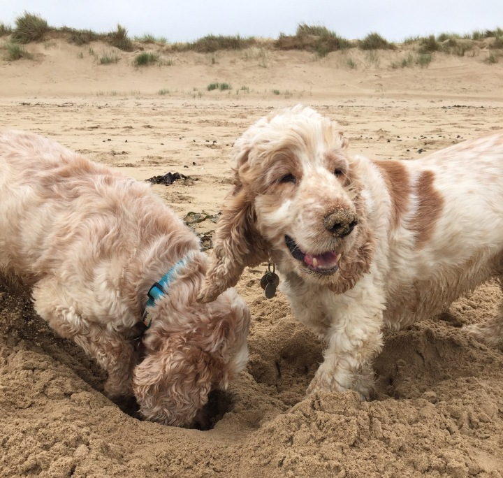 archie and dexter at the beach, the pet shop ripon