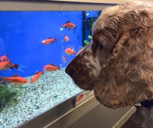 atchie and dexter, the pet shop ripon