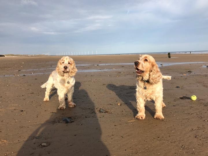 archie and Dexter the pet shop ripon, Marske Beach