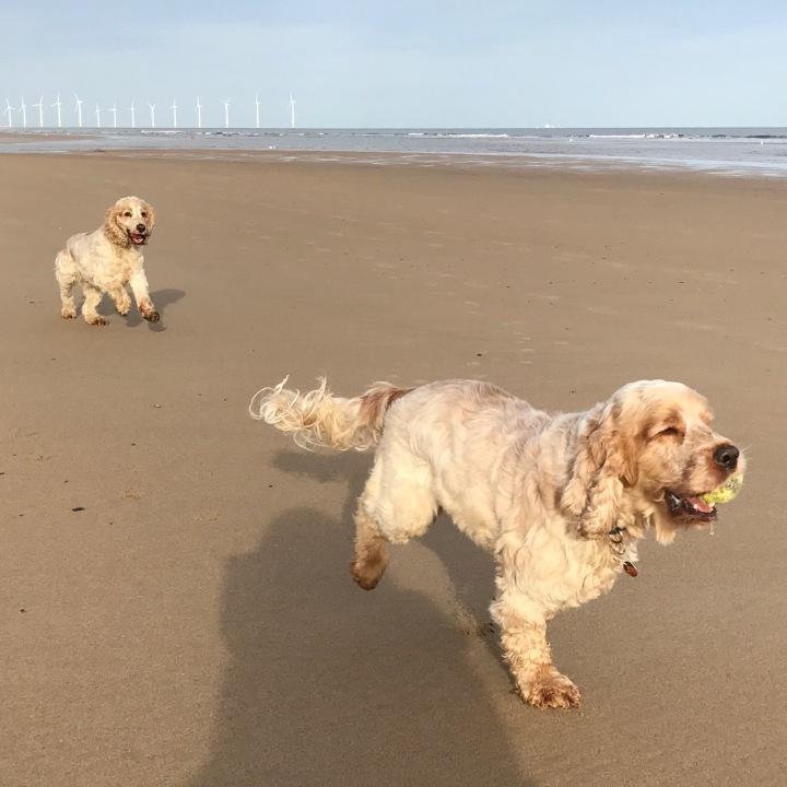 archie and dexter, the pet shop ripon, marske beach
