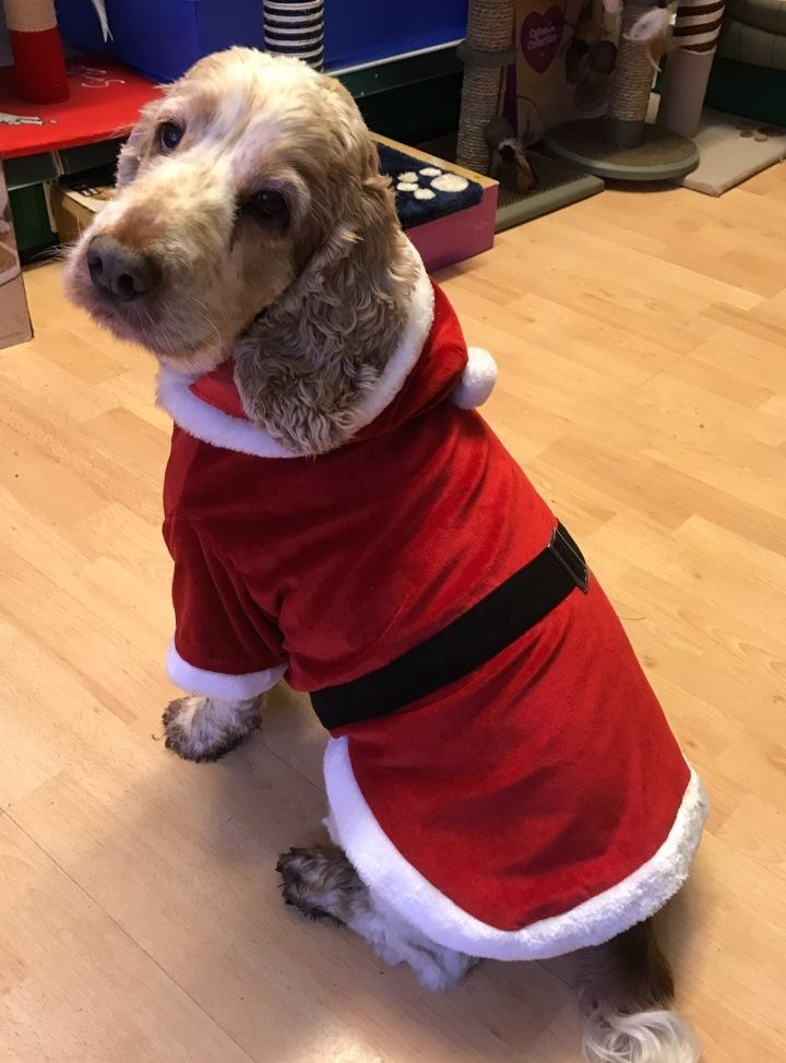 the pet shop ripon, archie and dexter, christmas dog